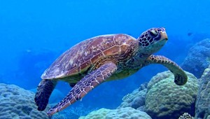 Discover the beautiful underwater world of Bonaire